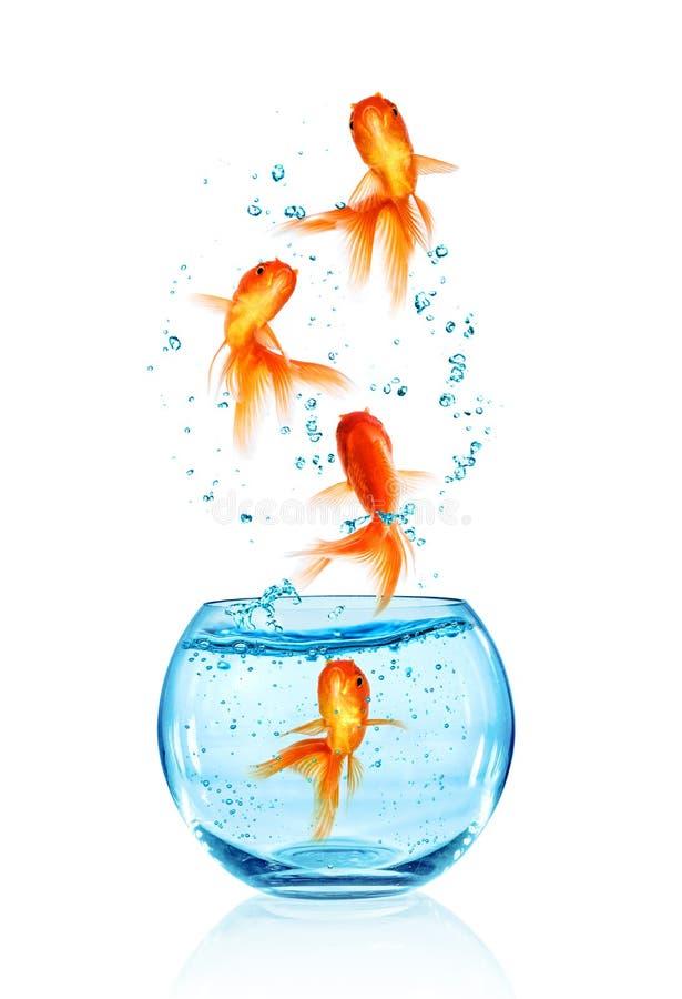Sauter de poisson rouge image stock image du simple for Aquarium poisson rouge simple