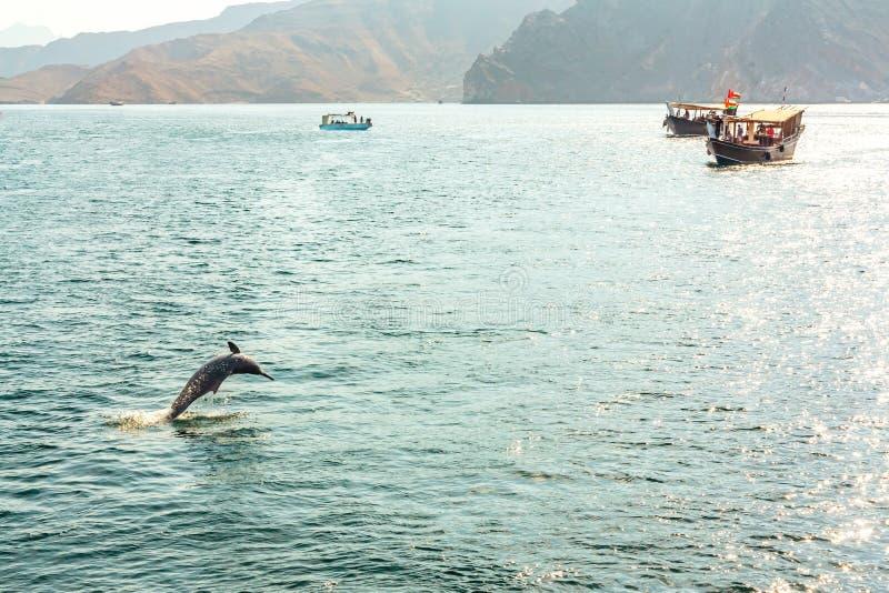 Sauter du dauphin de l'eau et des embarcations de plaisance dans le golfe d'Oman image libre de droits