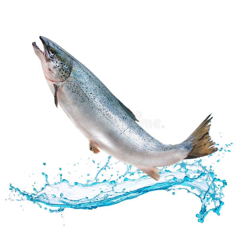 Sauter saumoné de poissons de l'eau photos stock