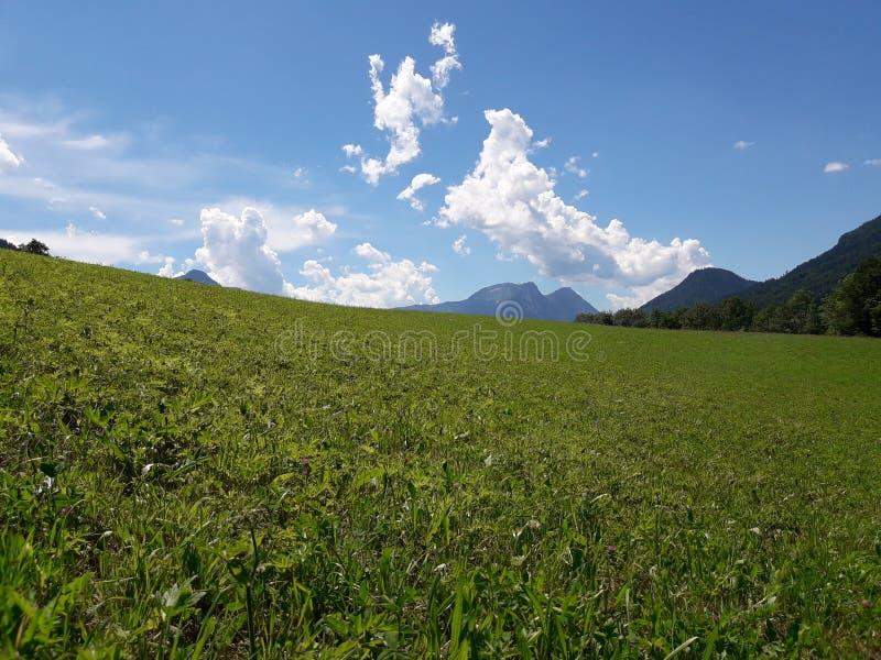 Sauterelle autrichienne images libres de droits