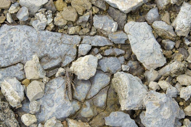 Sauterelle dans les pierres photo stock