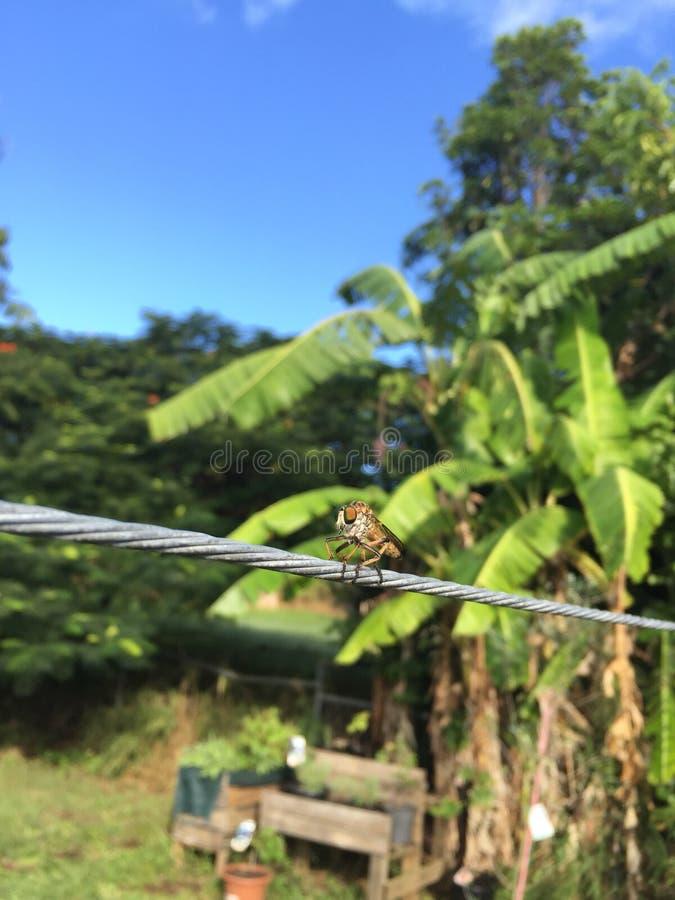 Sauterelle de sauterelle se reposant sur la corde à linge photos libres de droits