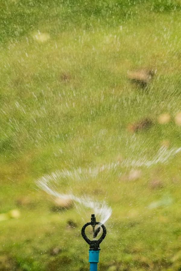 Sauteur de l'eau pour arroser l'usine image libre de droits