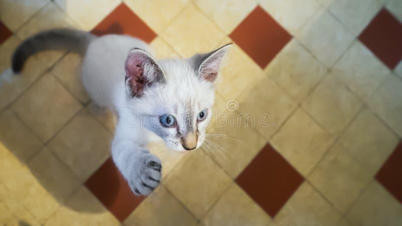 Sautez le chat photographie stock