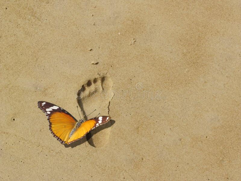 Sauvegardez la terre et la nature, guindineau sur l'empreinte de pas images libres de droits