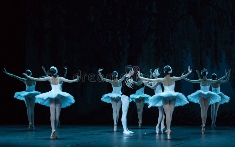 Sauvez le lac swan de cygne-ballet photos stock