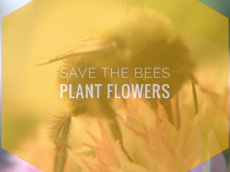 Sauvez les abeilles, fleurs d'usine image stock