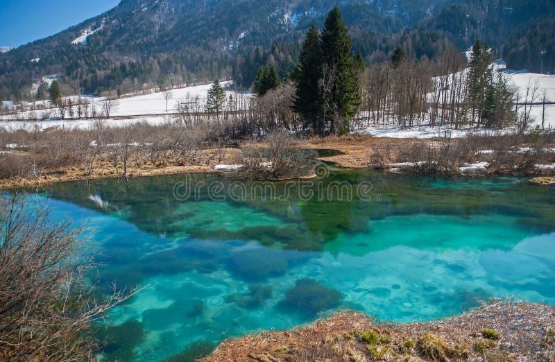 Sava春天, Zelenci,斯洛文尼亚 免版税库存照片