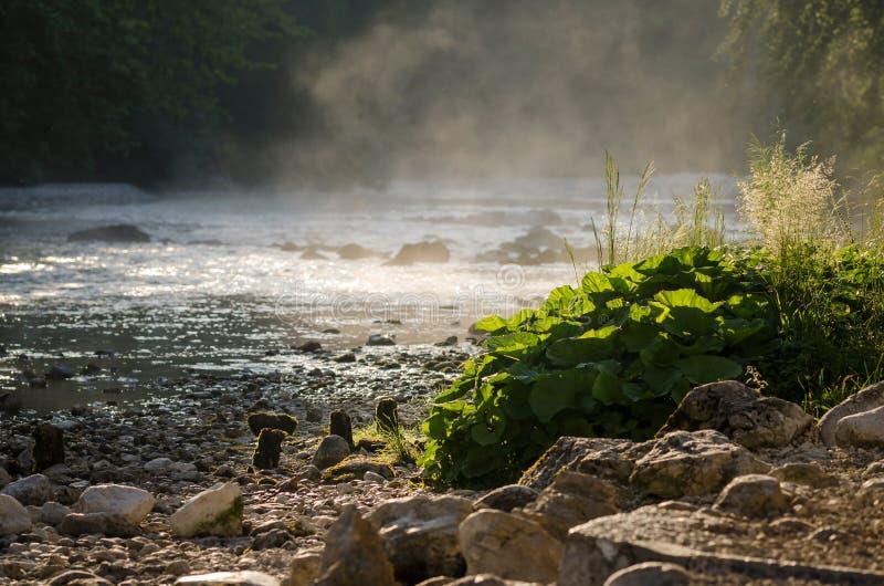 Sava Bohinjka小河,斯洛文尼亚,欧洲的可爱的早晨图片 图库摄影