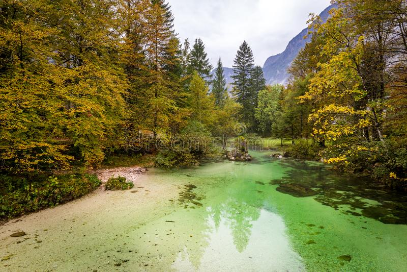 Sava Bohinjka river stream autumn forest view, Slovenia nature stock photography