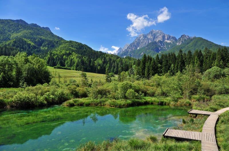 Sava spring, Zelenci, Slovenia. Sava spring in Zelenci near Kranjska gora town in Slovenia royalty free stock photography