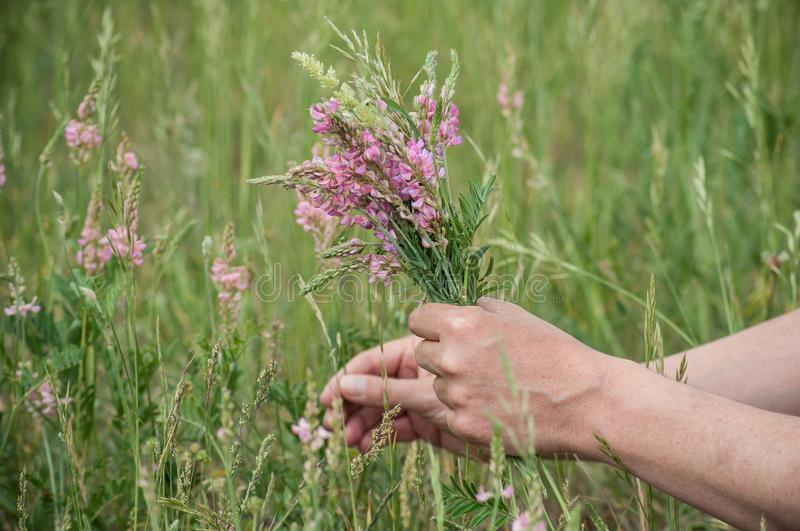 Savage flowers bouquet in hand of man in a meadow. Closeup of savage flowers bouquet in hand of man in a meadow royalty free stock image