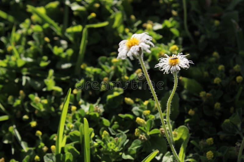 Savage flowers stock photos