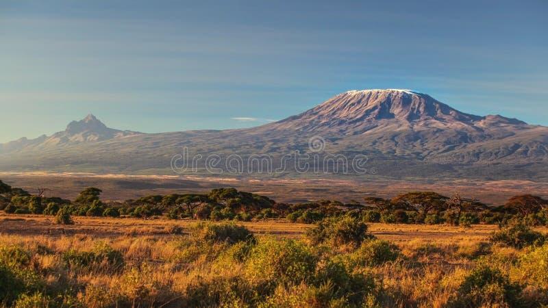 Savana africano seco árido na noite atrasada com o Monte Kilimanjaro fotografia de stock
