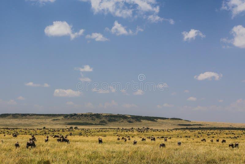 Savana di Mara dei masai fotografie stock libere da diritti