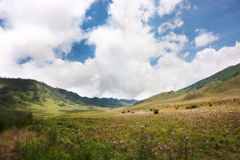 Savana do campo de grama verde com os montes das árvores das flores e um céu azul imagens de stock