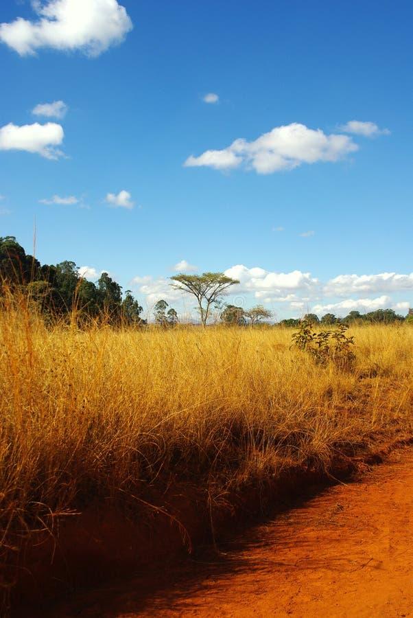 Savanna. Beautiful African savanna landscape in spring time stock image