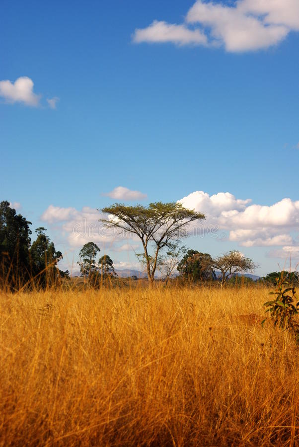 Savanna Africa. Scenery in a national park in Swaziland royalty free stock photography