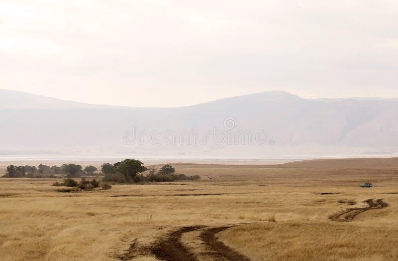 Savanna africana fotografie stock