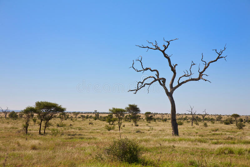 Savanna Bush Veld With Trees, South Africa Stock Photos
