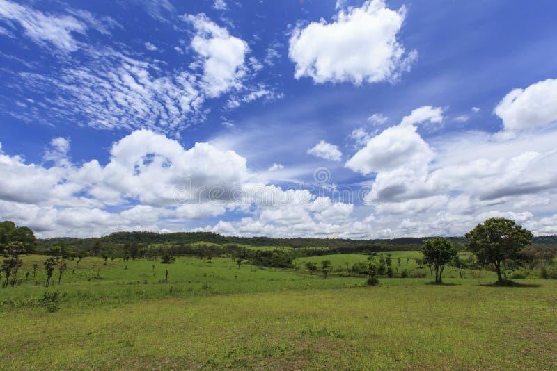 Savanna di Thung Salaeng Luang in Tailandia fotografia stock