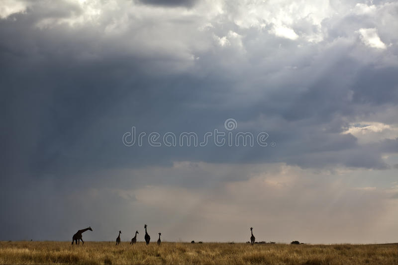 Download The savanna in kenya stock image. Image of kenya, clouds - 27899903