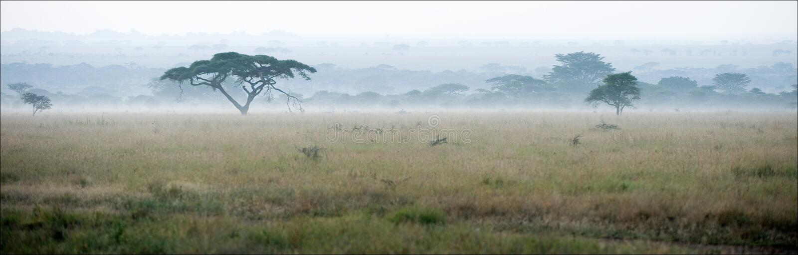 Savanna In A Morning Fog. Stock Photo