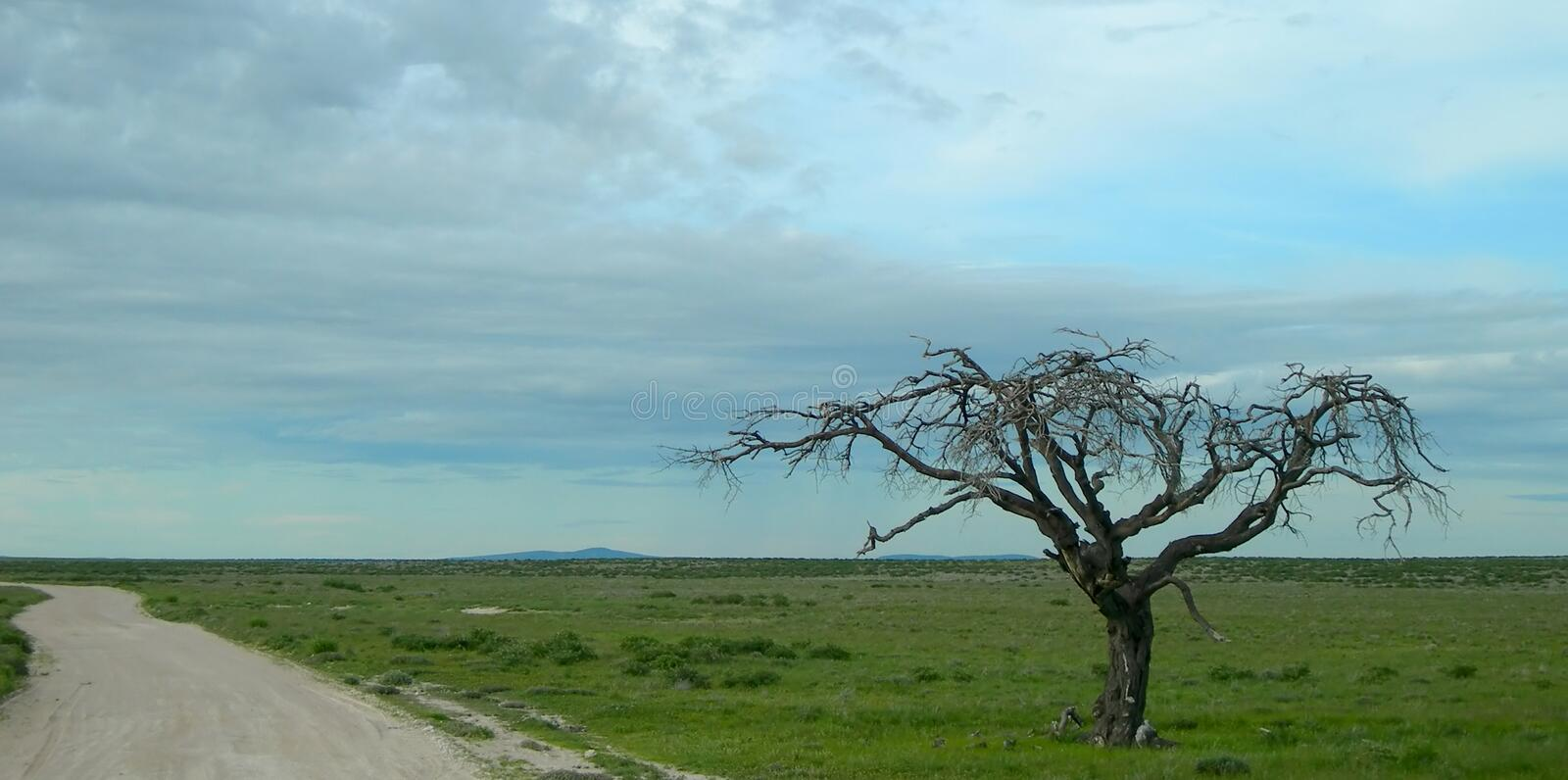 Download Savanna In Namibia, Africa Stock Photo - Image: 13131620