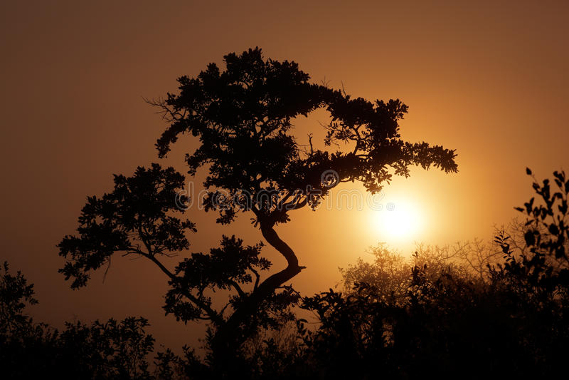 Download Savanna sunrise stock photo. Image of mist, tree, light - 26388530