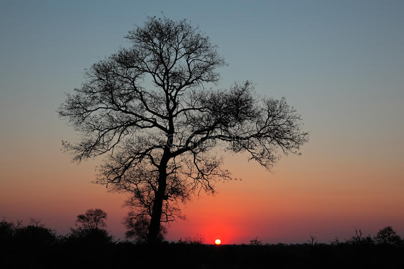 Savanna sunset stock images
