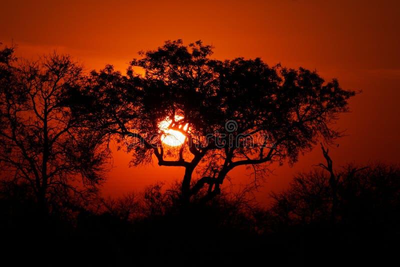 Savanna sunset, Kruger park, South Africa stock photo