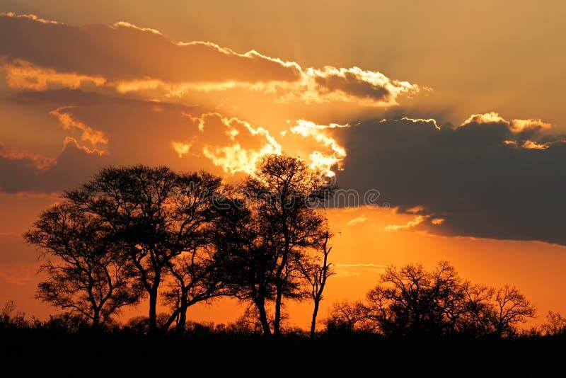 Savanna sunset royalty free stock photography