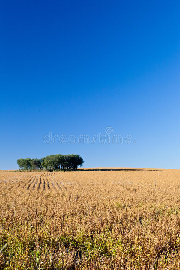 Download Savannah stock image. Image of space, trees, green, blue - 24284087