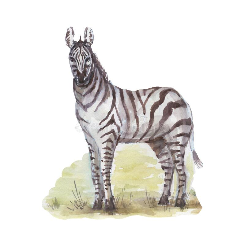 Clipart Zebra Photos Free Royalty Free Stock Photos From Dreamstime