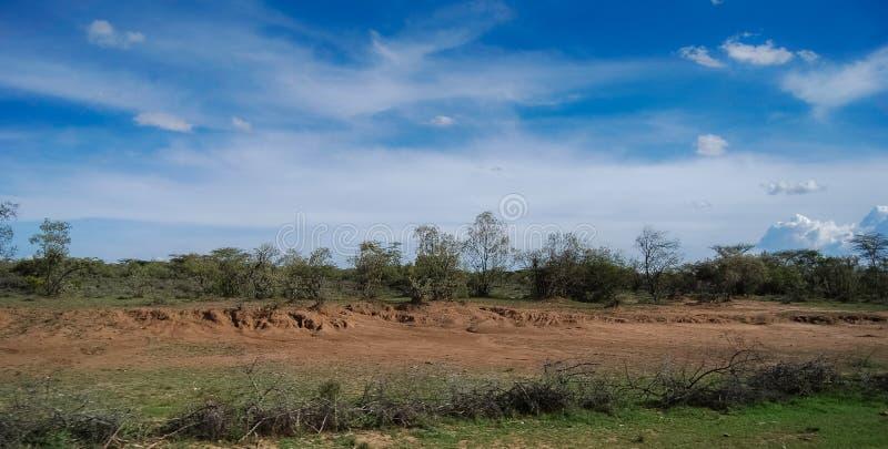 Savannah i Maasai Mara National Reserve Kenya Africa royaltyfria foton