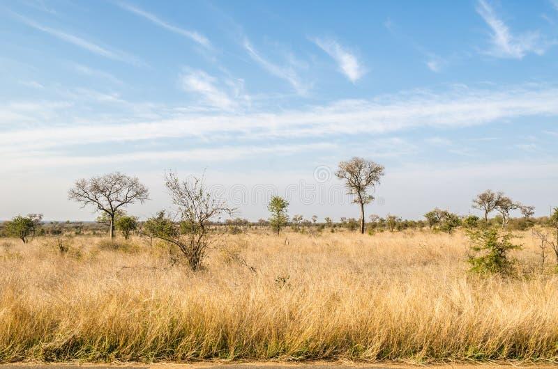 Savannah Kruger nationalpark africa near berömda kanonkopberg den pittoreska södra fjädervingården arkivfoto