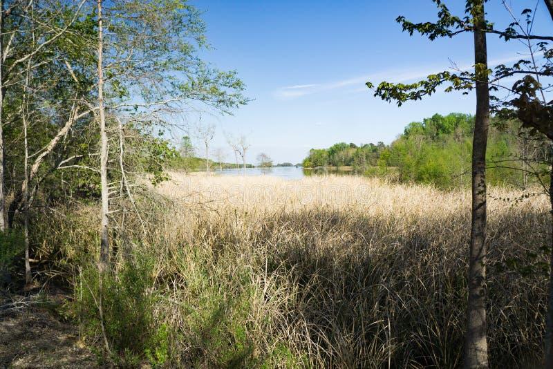 Savannah River Marsh royaltyfria foton