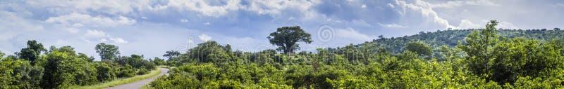 Savannahlandskap i den Kruger nationalparken, Sydafrika royaltyfria foton
