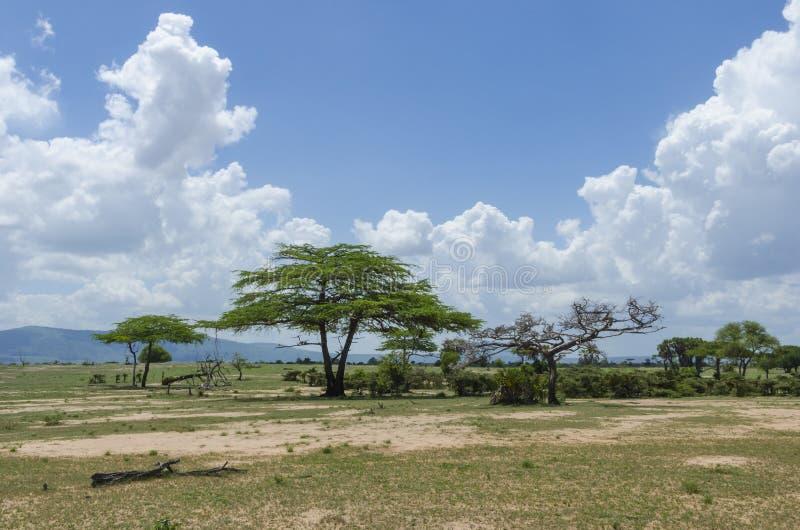 Savannahlandskap Tanzania fotografering för bildbyråer