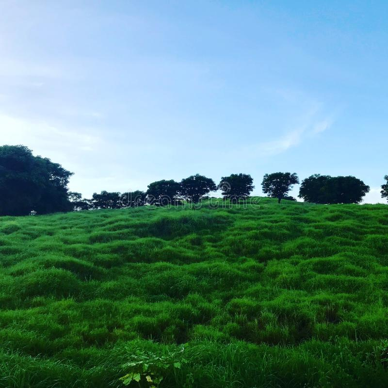 savanne stockbild