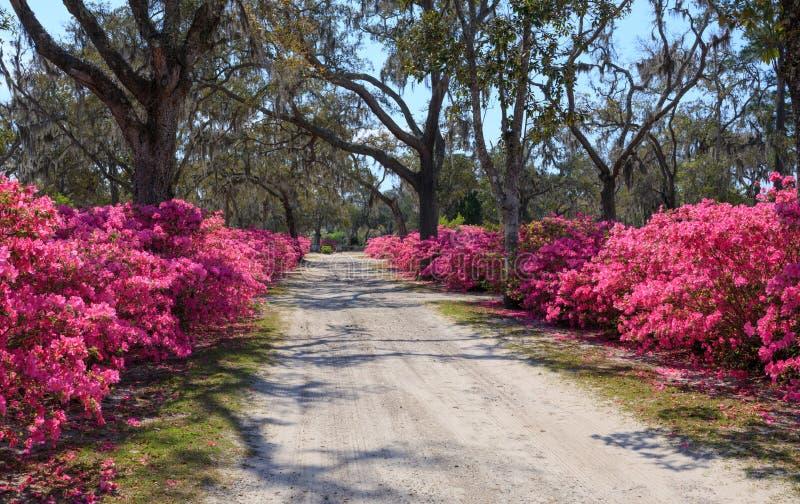 Savanne GA Bonaventure Cemetery Road stockbilder
