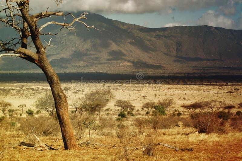 Savanne in Kenia stockfotografie
