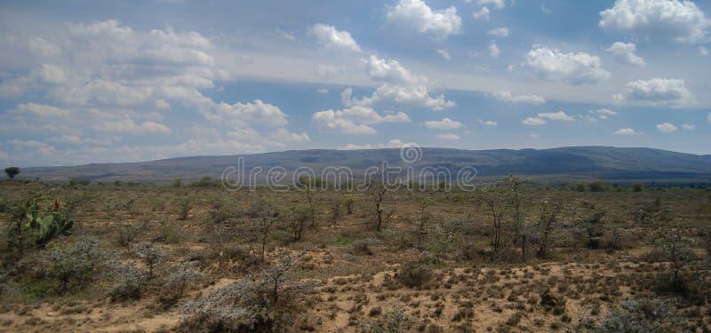 Savanne in Kenia Afrika stock afbeeldingen