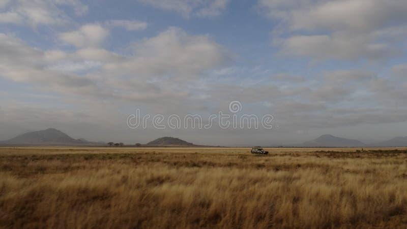 Savannegebied in zomer stock fotografie