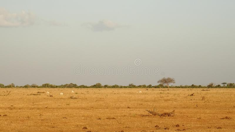 Savannegebied in zomer royalty-vrije stock afbeelding
