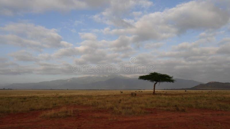 Savannegebied in zomer stock foto