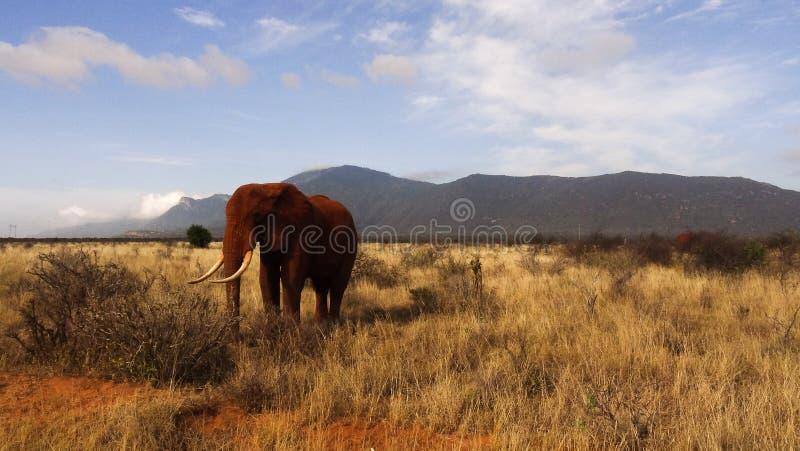 Savannegebied in zomer stock afbeeldingen