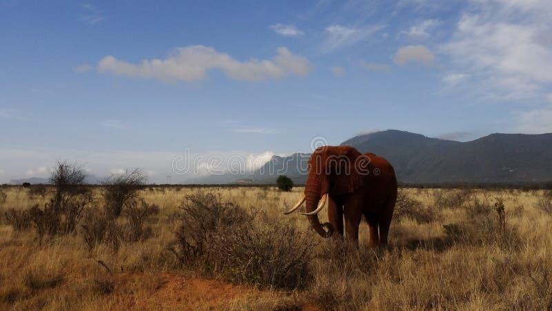 Savannegebied in zomer royalty-vrije stock afbeeldingen