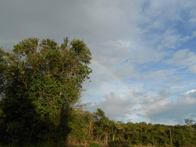 Savannenlandschaft gelegen in Süd-Venezuela im La Gran Sabana Amazonas mit Regenbogen im Himmel lizenzfreies stockfoto