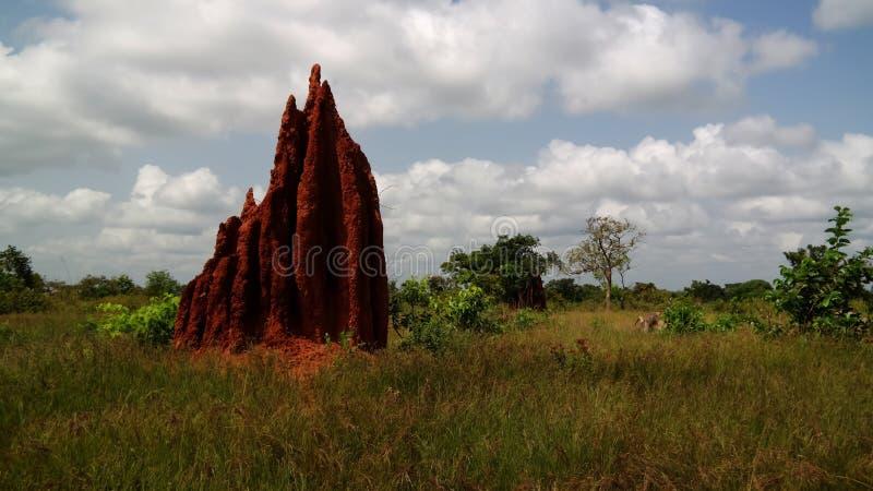 Savannenlandschaft mit dem Termitenhügel, Ghana lizenzfreie stockbilder